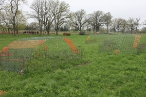 R-Farm's chickens rotationally graze in moveable pens starting in early spring and then get moved into the greenhouse by Thanksgiving.